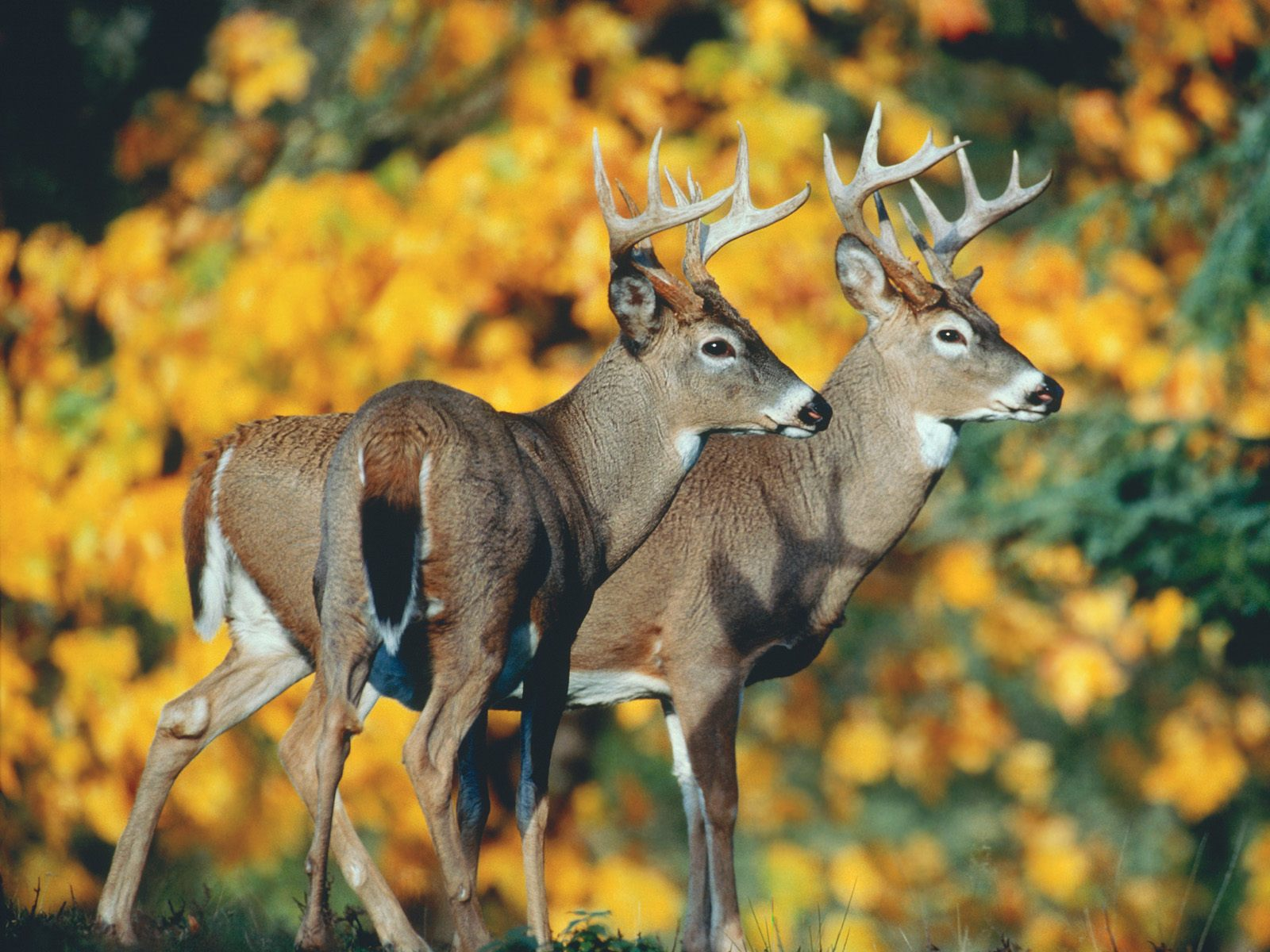 DEER MANAGEMENT UPDATE
